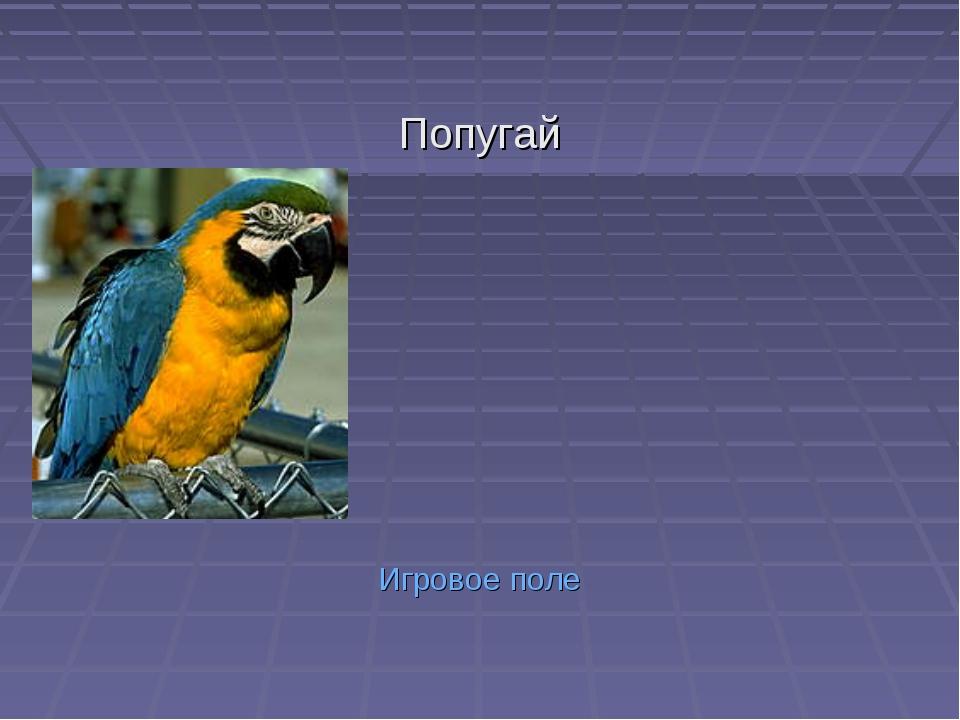 Попугай Игровое поле