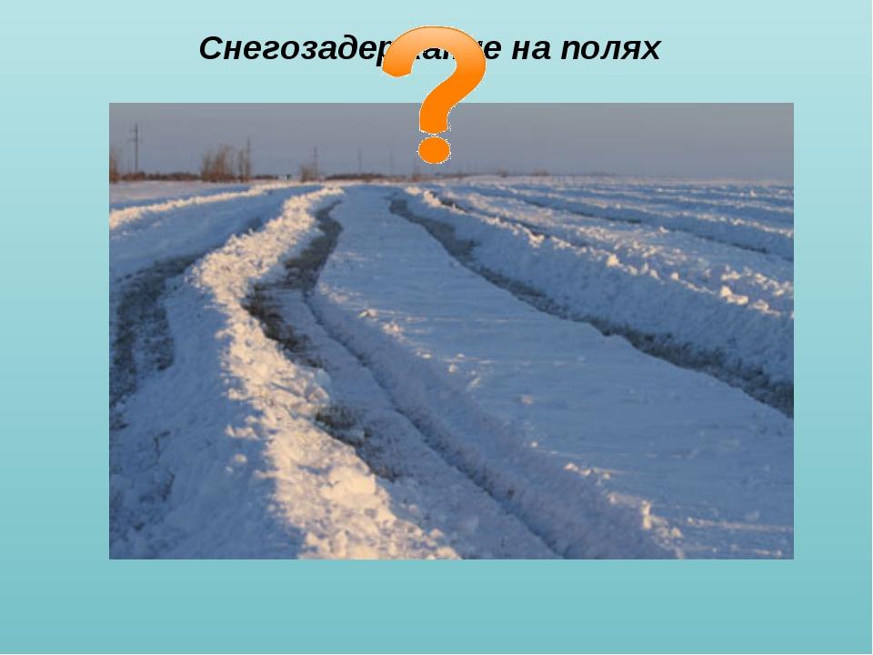 Снегозадержание на полях