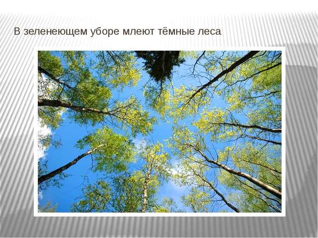В зеленеющем уборе млеют тёмные леса