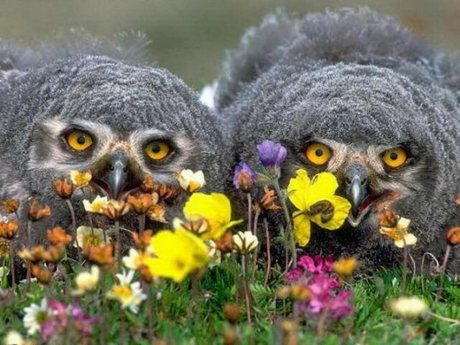 удив совы.jpg