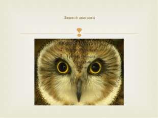 Лицевой диск совы 