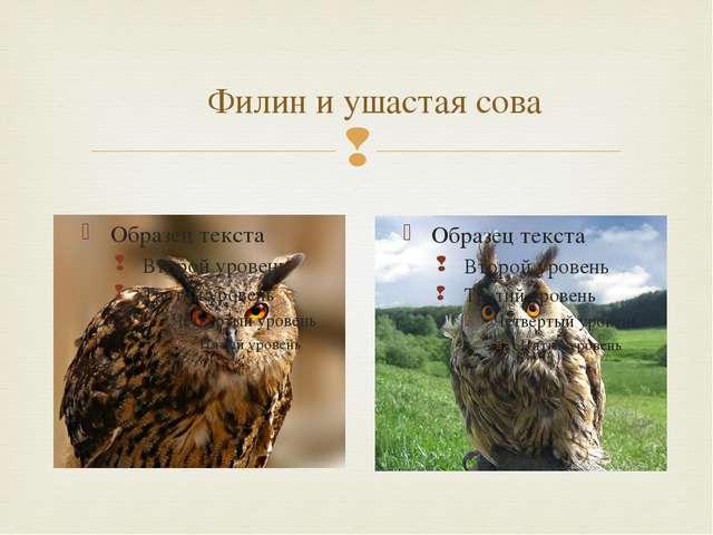 Филин и ушастая сова 
