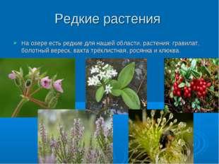 Редкие растения На озере есть редкие для нашей области, растения: гравилат, б