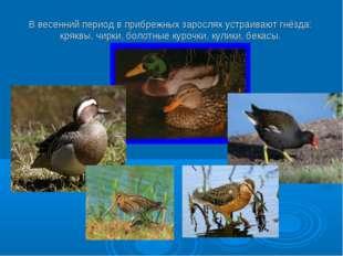 В весенний период в прибрежных зарослях устраивают гнёзда: кряквы, чирки, бол