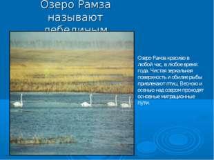 Озеро Рамза называют лебединым Озеро Рамза красиво в любой час, в любое время