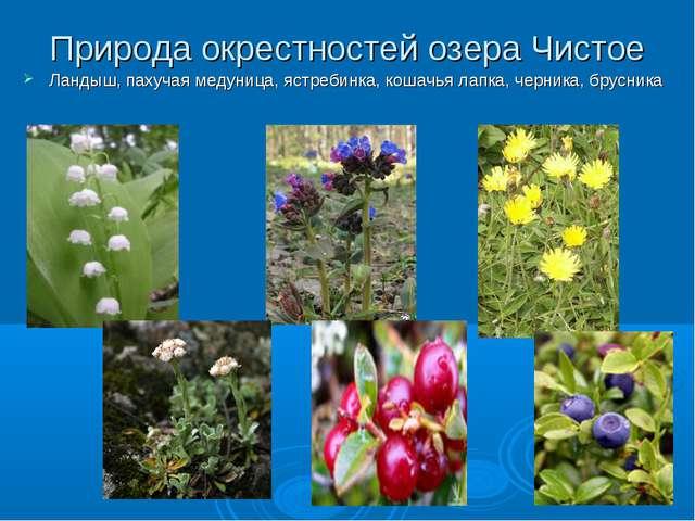 Природа окрестностей озера Чистое Ландыш, пахучая медуница, ястребинка, кошач...