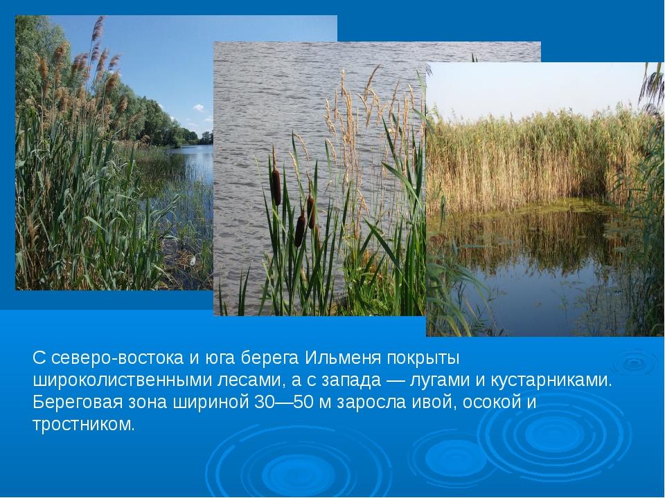 С северо-востока и юга берега Ильменя покрыты широколиственными лесами, а с з...