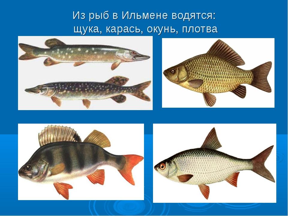 Рецепты из рыбы скумбрия с фото