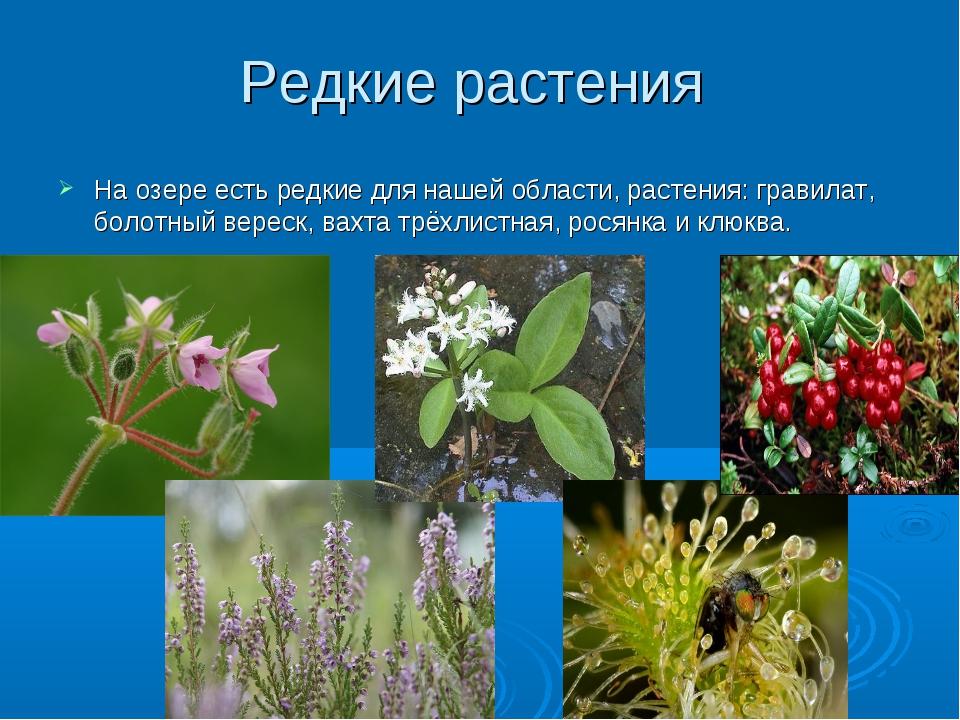 Редкие растения На озере есть редкие для нашей области, растения: гравилат, б...