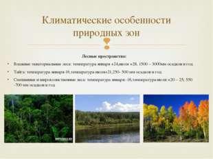 Лесные пространства: Влажные экваториальные леса: температура января +24,июля