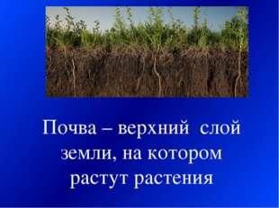 Почва – верхний слой земли, на котором растут растения