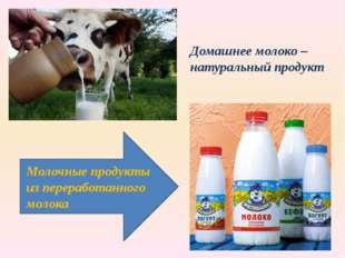Домашнее молоко – натуральный продукт Молочные продукты из переработанного м