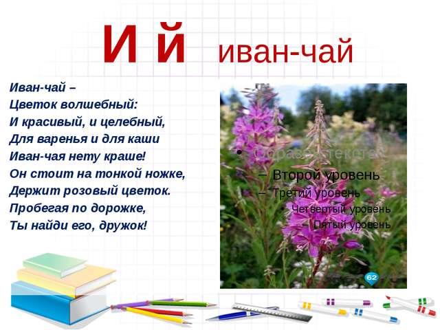 И й иван-чай Иван-чай – Цветок волшебный: И красивый, и целебный, Для варень...