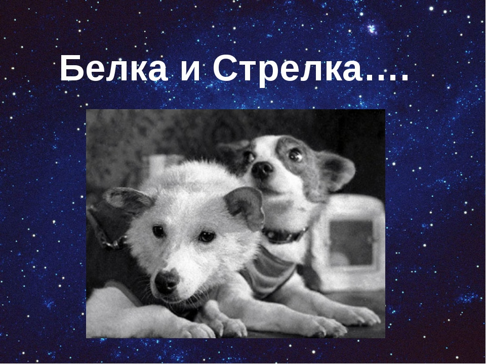 Белка и Стрелка….