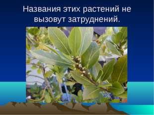 Названия этих растений не вызовут затруднений.