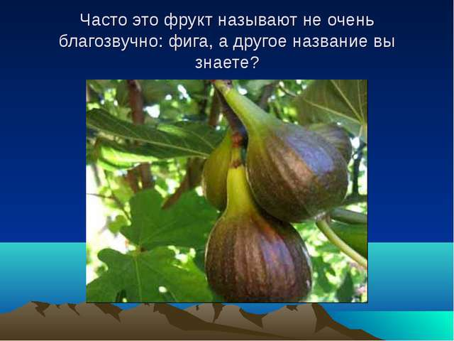 Часто это фрукт называют не очень благозвучно: фига, а другое название вы зна...