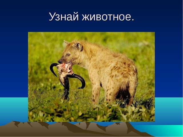 Узнай животное.