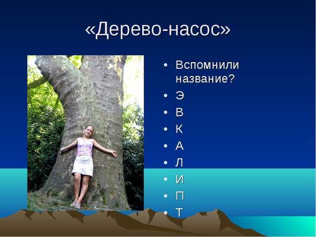 «Дерево-насос» Вспомнили название? Э В К А Л И П Т