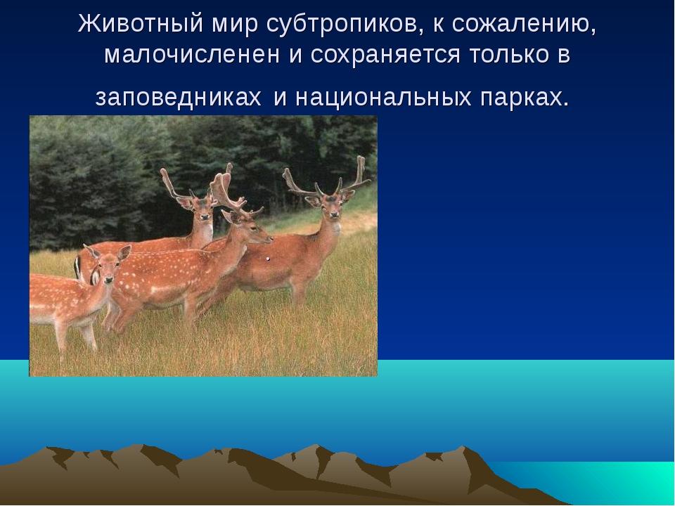 Животный мир субтропиков, к сожалению, малочисленен и сохраняется только в за...