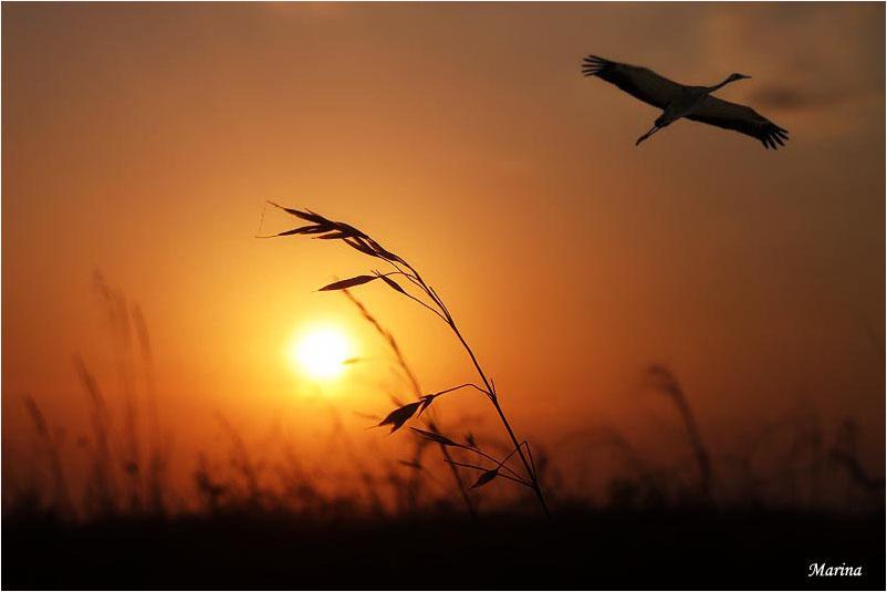 фото: Журавль по небу летит фотограф: Марина WWW.PHOTODOM.COM