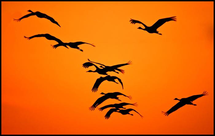 Фотография Журавли прилетели... из раздела фотоохота 3514885 - фото.сайт - Photosight.ru
