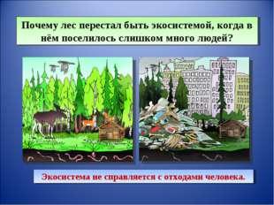 Почему лес перестал быть экосистемой, когда в нём поселилось слишком много лю