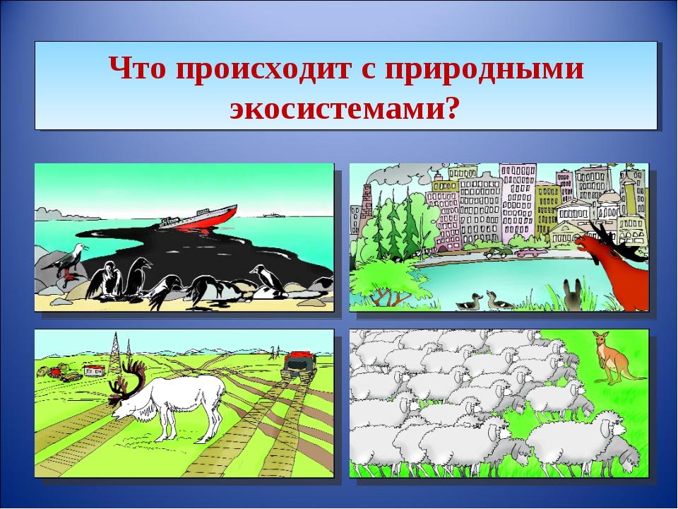 Что происходит с природными экосистемами?