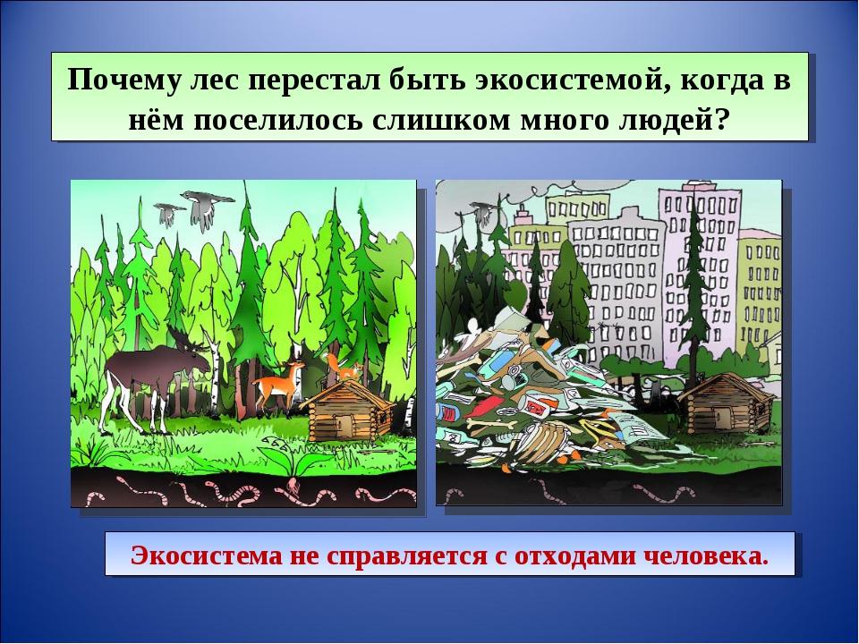 Почему лес перестал быть экосистемой, когда в нём поселилось слишком много лю...