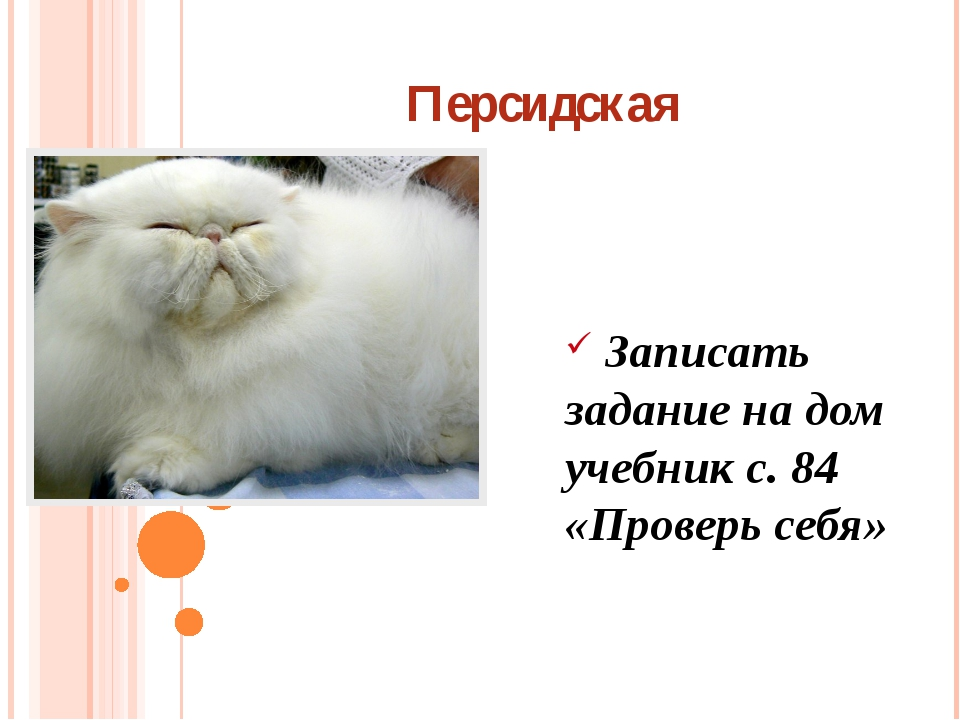 Персидская Записать задание на дом учебник с. 84 «Проверь себя»