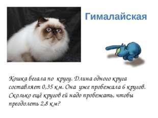 Гималайская Кошка бегала по кругу. Длина одного круга составляет 0,35 км. Она