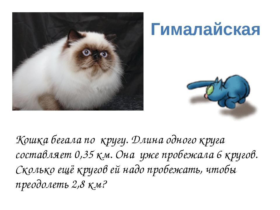 Гималайская Кошка бегала по кругу. Длина одного круга составляет 0,35 км. Она...