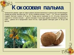 Кокосовая пальма Тропическоедерево,одинизсамыхширокораспространенныхи