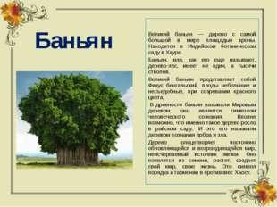 Баньян Великий баньян — дерево с самой большой в мире площадью кроны. Находит