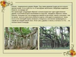Баньян - национальное дерево Индии. Под таким деревом Будда достиг полного пр