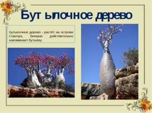 Бутылочное дерево Бутылочное дерево - растёт на острове Сокотра. Внешне дейст