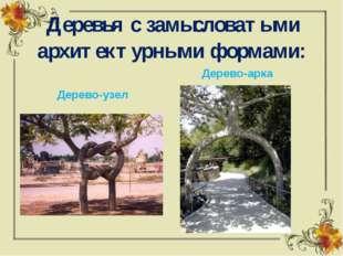 Деревья с замысловатыми архитектурными формами: Дерево-узел Дерево-арка
