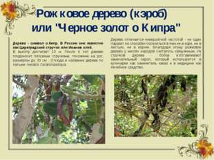 """Рожковое дерево (кэроб)  или """"Черное золото Кипра"""" Дерево - символ о.Кипр."""