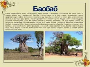 Баобаб Среди удивительных чудес растительного мира Африки, а конкретно тропич
