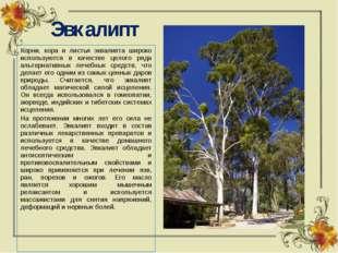 Эвкалипт Корни, кора и листья эквалипта широко используются в качестве целого