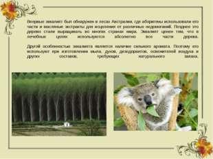 Впервые эвкалипт был обнаружен в лесах Австралии, где аборигены использовали