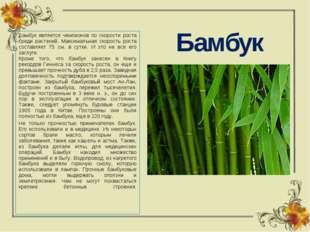 Бамбук Бамбук является чемпионов по скорости роста среди растений. Максимальн