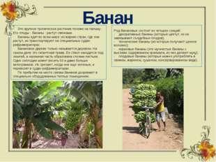 Банан  Это крупное тропическое растение похоже на пальму. Его плоды - бан
