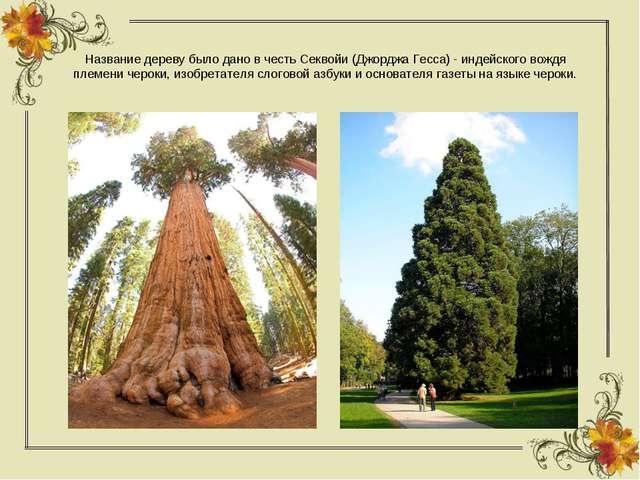 Название дереву было дано в честь Секвойи (Джорджа Гесса) - индейского вождя...