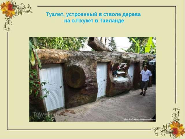 Туалет, устроенный в стволе дерева на о.Пхукет в Таиланде