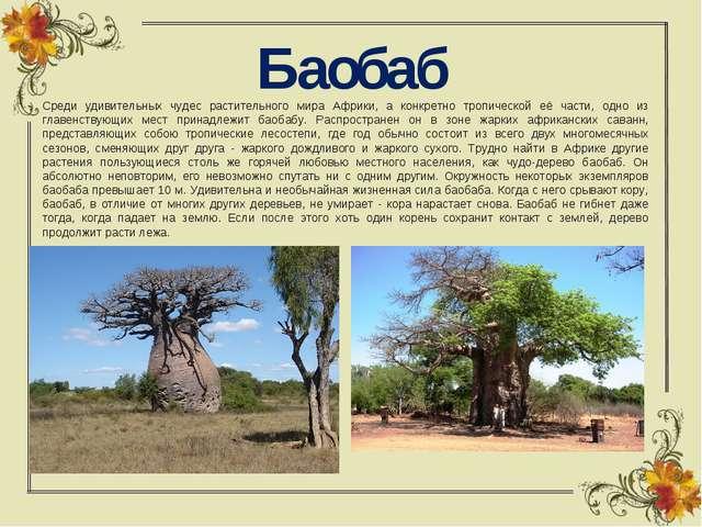 Баобаб Среди удивительных чудес растительного мира Африки, а конкретно тропич...
