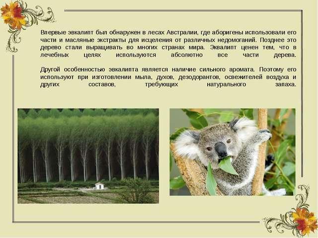Впервые эвкалипт был обнаружен в лесах Австралии, где аборигены использовали...