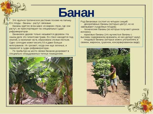 Банан  Это крупное тропическое растение похоже на пальму. Его плоды - бан...