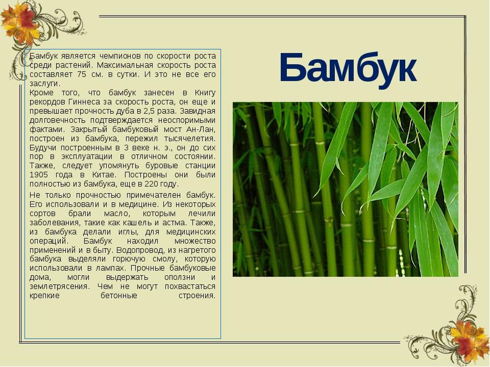 Бамбук Бамбук является чемпионов по скорости роста среди растений. Максимальн...