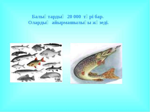 Балықтардың 20 000 түрі бар. Олардың айырмашылығы жүзеді.