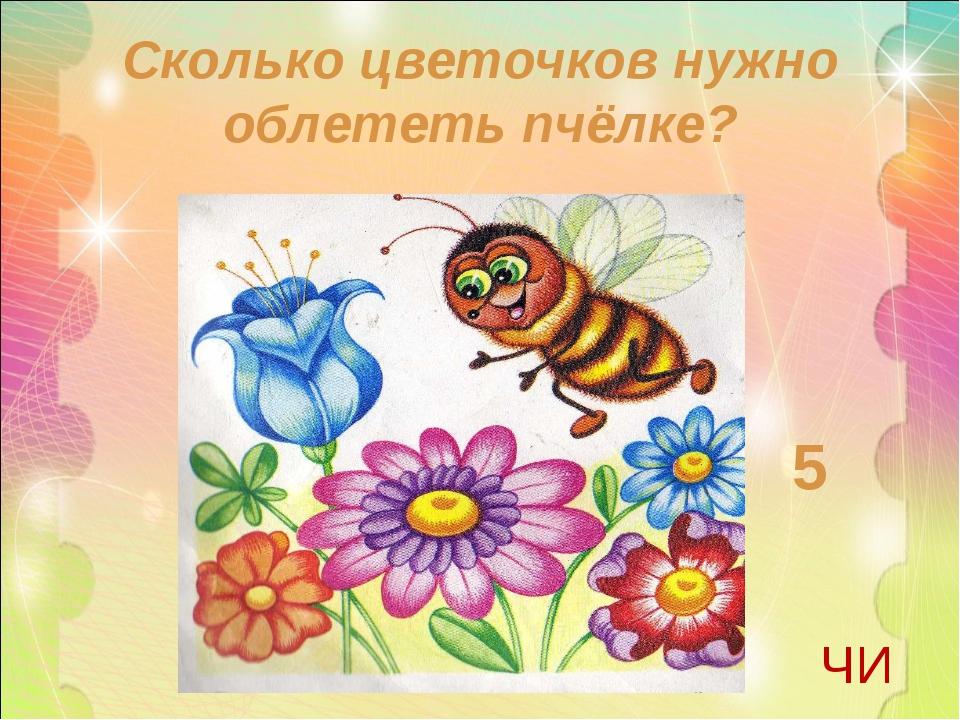 Сколько цветочков нужно облететь пчёлке? 5 ЧИ